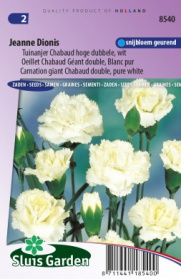 Tuinanjer Chabaud hoge dubbele Jeanne Dionis, wit