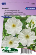 Petunia Snowball, pure white