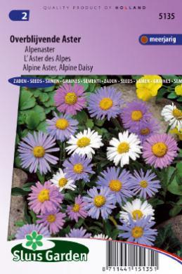 Aster Vivace L Aster Des Alpes Graines De Fleurs Vivaces