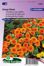 Goudsbloem Orange Gitana