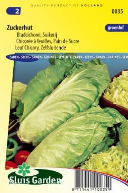 Chicor e feuilles zuckerhut pain de sucre l gumes - Pain de sucre legume ...