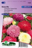 China aster Riviera Mix