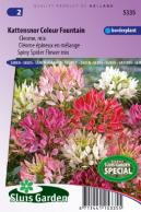 Kattensnor Colour Fountain mix (Cleome)