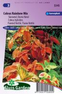 Siernetel Rainbow  mix, Market Growers quality (Coleus)