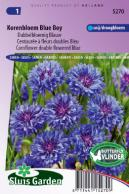 Cornflower Blue Boy double flowered