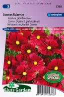 Cosmos Rubenza Fleuroselect Novelty