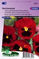 Pansy Swiss Giants Alpenglow