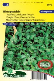 Purslane Winter, Miner's Lettuce Cuban Spinach