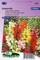 Snapdragon Rainbow mix (semi-tall)