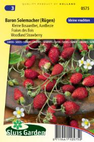 Strawberry woodland, Baron Solemacher (small fruited)