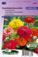 Zinnia Dahlia flowered Mix