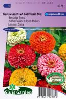 Zinnia Reuzen van California Mix